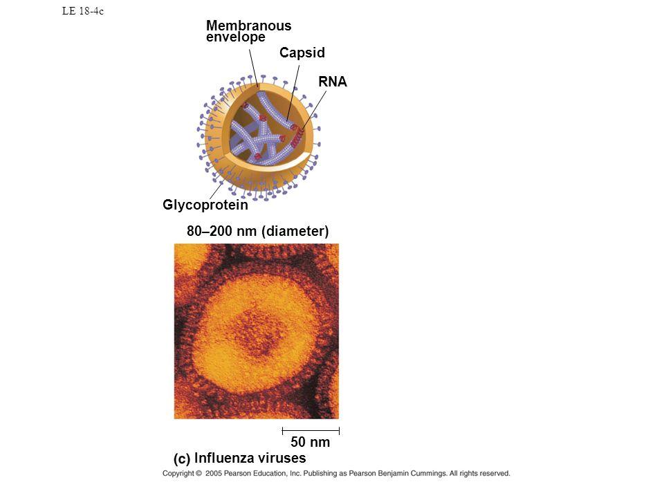 LE 18-4c Glycoprotein 80–200 nm (diameter) RNA Capsid Influenza viruses 50 nm Membranous envelope