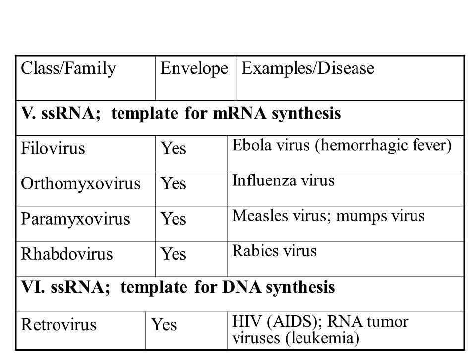 Class/FamilyEnvelopeExamples/Disease V. ssRNA; template for mRNA synthesis FilovirusYes Ebola virus (hemorrhagic fever) OrthomyxovirusYes Influenza vi
