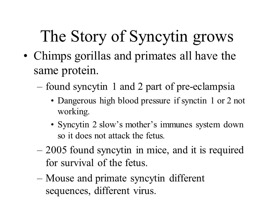 The Story of Syncytin grows Chimps gorillas and primates all have the same protein. –found syncytin 1 and 2 part of pre-eclampsia Dangerous high blood