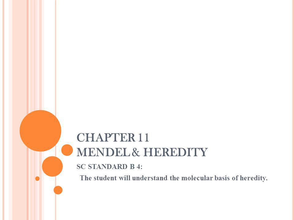 CHAPTER 11 MENDEL & HEREDITY SC STANDARD B 4: The student will understand the molecular basis of heredity.