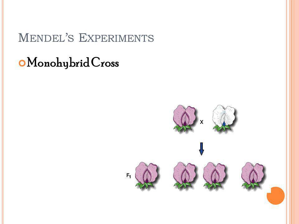 M ENDEL S E XPERIMENTS Monohybrid Cross