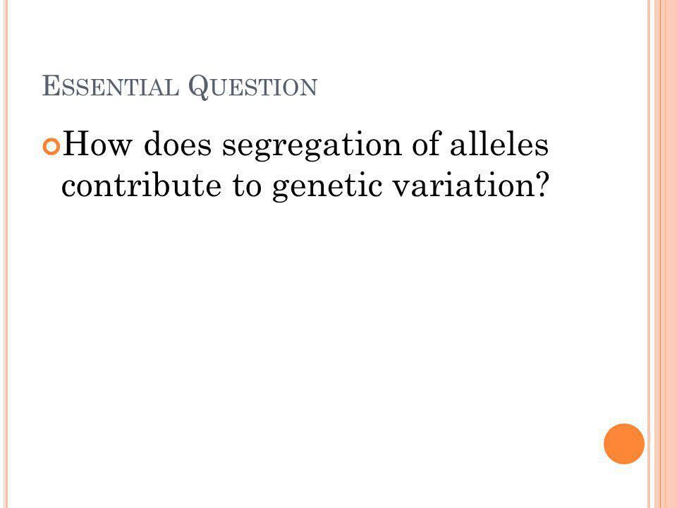 E SSENTIAL Q UESTION How does segregation of alleles contribute to genetic variation?