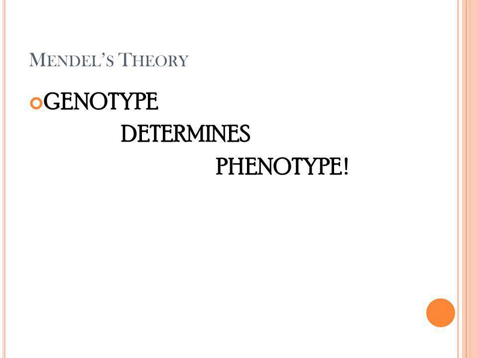 M ENDEL S T HEORY GENOTYPE DETERMINES PHENOTYPE !
