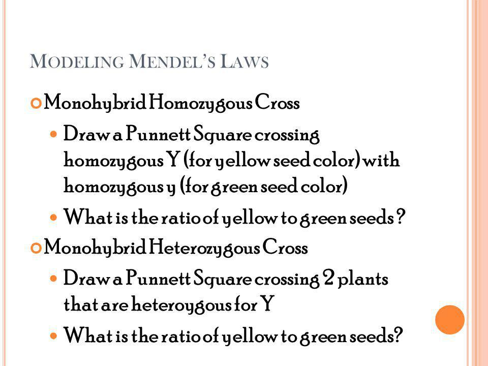 M ODELING M ENDEL S L AWS Monohybrid Homozygous Cross Draw a Punnett Square crossing homozygous Y (for yellow seed color) with homozygous y (for green seed color) What is the ratio of yellow to green seeds .