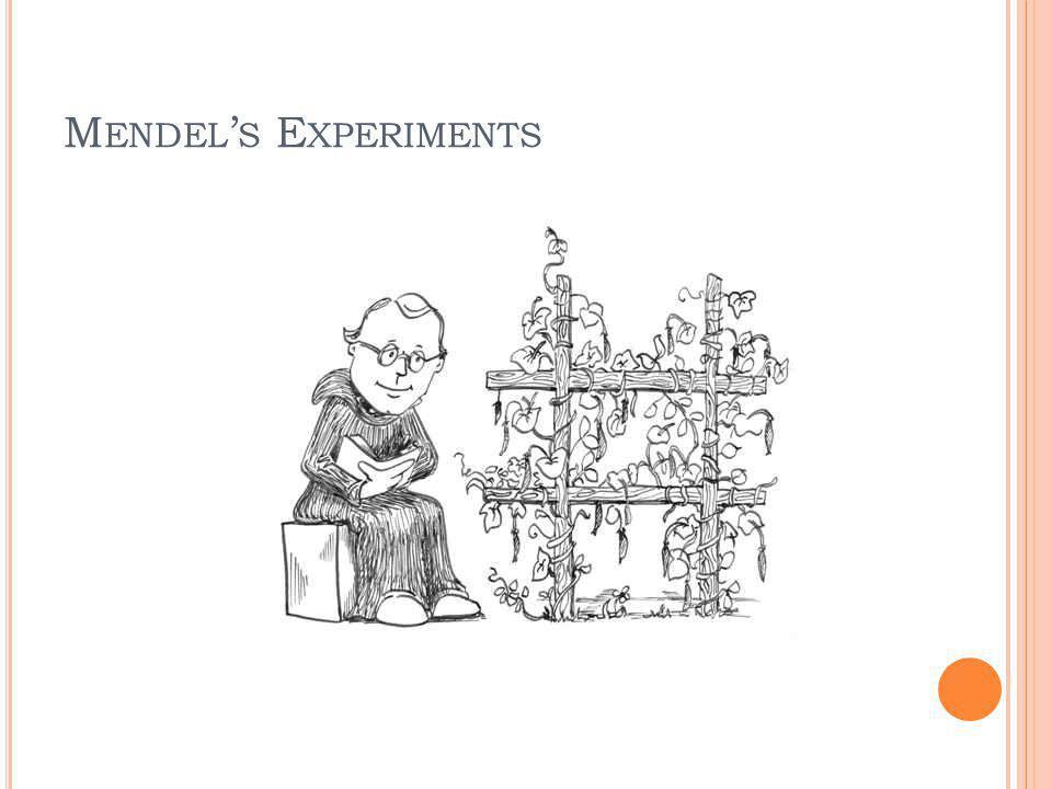 M ENDEL S E XPERIMENTS