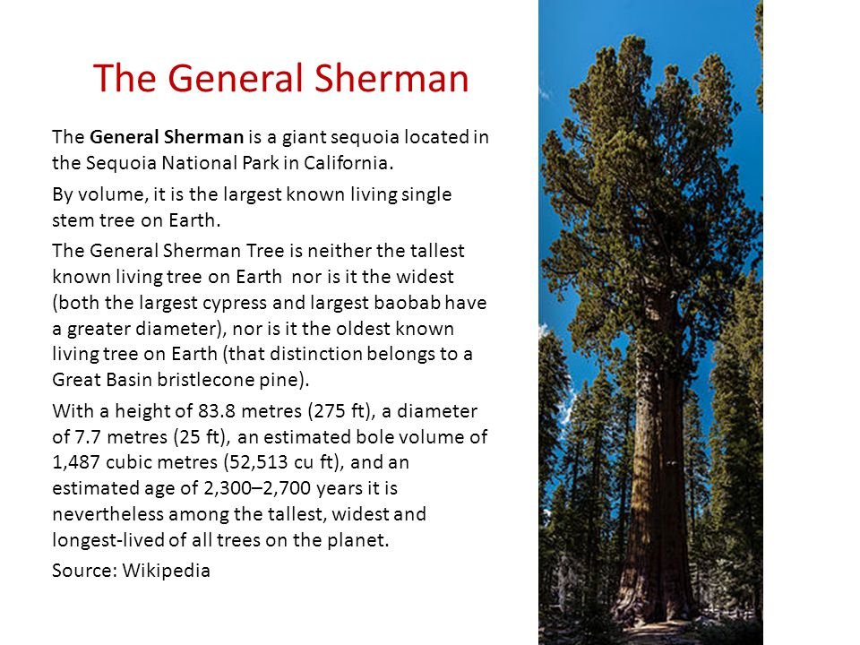 The General Sherman The General Sherman is a giant sequoia located in the Sequoia National Park in California.