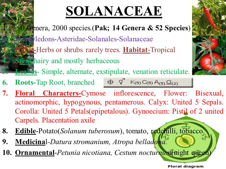Plant family-Arecaceae It is also known as palmae family and comprises of roughly 202 genera and 2600 species.
