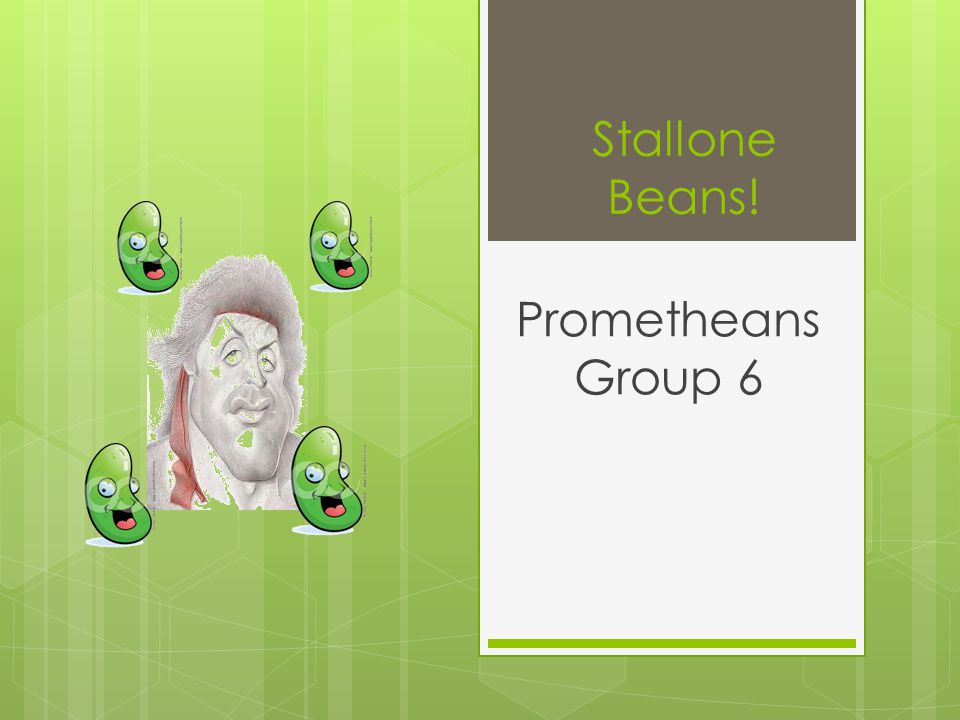 Stallone Beans! Prometheans Group 6