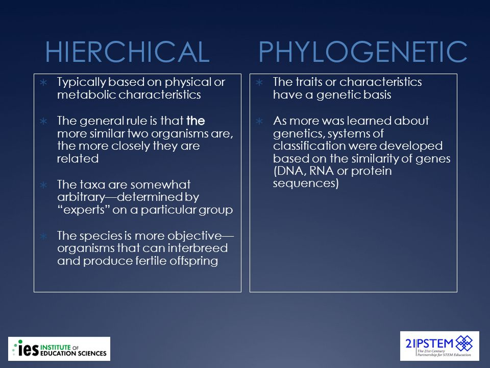 HIERCHICAL PHYLOGENETIC The traits or characteristics have a genetic basis As more was learned about genetics, systems of classification were developed based on the similarity of genes (DNA, RNA or protein sequences)