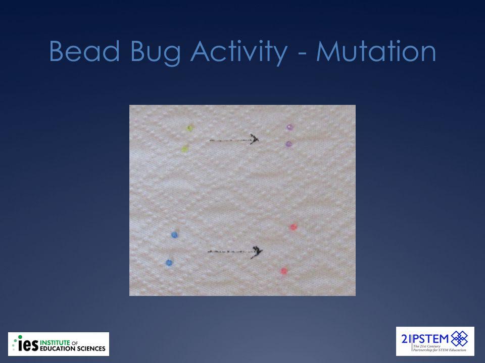 Bead Bug Activity - Mutation