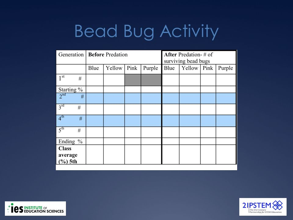 Bead Bug Activity