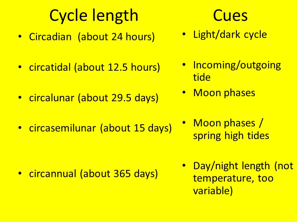 Cycle length Cues Circadian (about 24 hours) circatidal (about 12.5 hours) circalunar (about 29.5 days) circasemilunar (about 15 days) circannual (about 365 days) Light/dark cycle Incoming/outgoing tide Moon phases Moon phases / spring high tides Day/night length (not temperature, too variable)
