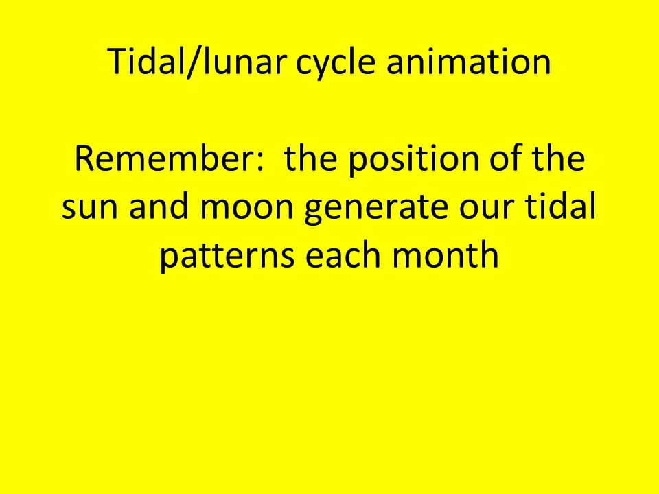 Tidal/lunar cycle animation Remember: the position of the sun and moon generate our tidal patterns each month