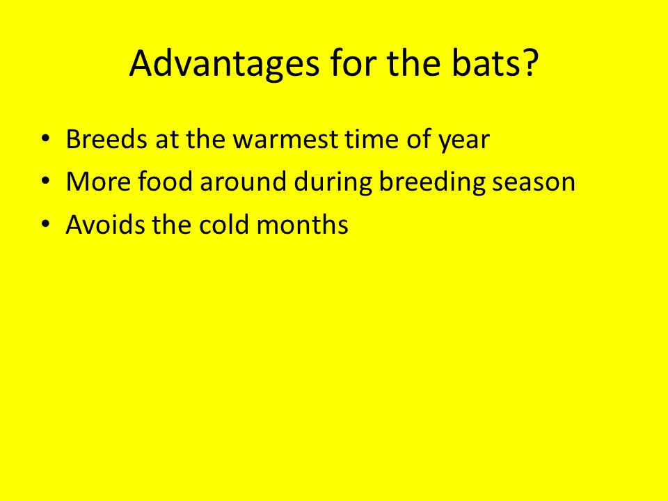 Advantages for the bats.