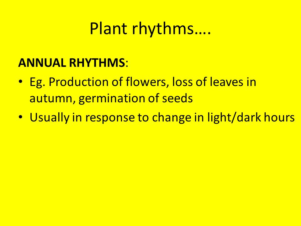 Plant rhythms…. ANNUAL RHYTHMS: Eg. Production of flowers, loss of leaves in autumn, germination of seeds Usually in response to change in light/dark