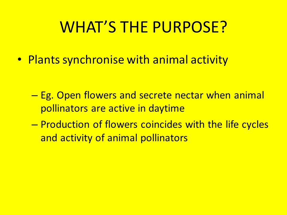 WHATS THE PURPOSE. Plants synchronise with animal activity – Eg.