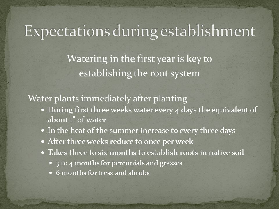 Watering in the first year is key to establishing the root system Water plants immediately after planting During first three weeks water every 4 days the equivalent of about 1 of water In the heat of the summer increase to every three days After three weeks reduce to once per week Takes three to six months to establish roots in native soil 3 to 4 months for perennials and grasses 6 months for tress and shrubs
