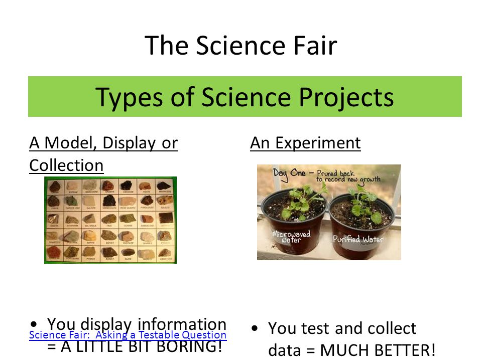 The Science Fair Testable Question How does fertilizer affect the growth of bean plants.