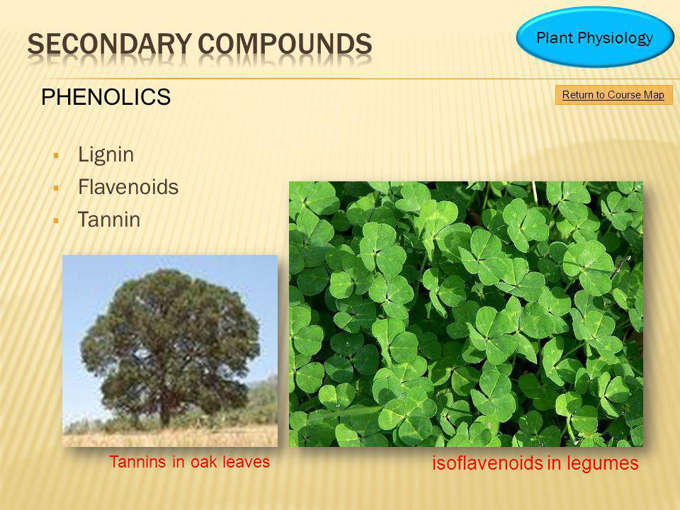 Lignin Flavenoids Tannin isoflavenoids in legumes Tannins in oak leaves Return to Course Map Plant Physiology PHENOLICS