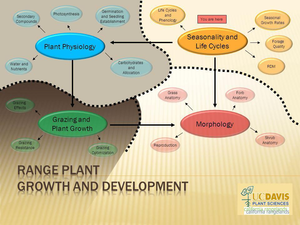 Plant Physiology Morphology Seasonality and Life Cycles Grazing and Plant Growth Seasonal Growth Rates Germination and Seedling Establishment Grazing