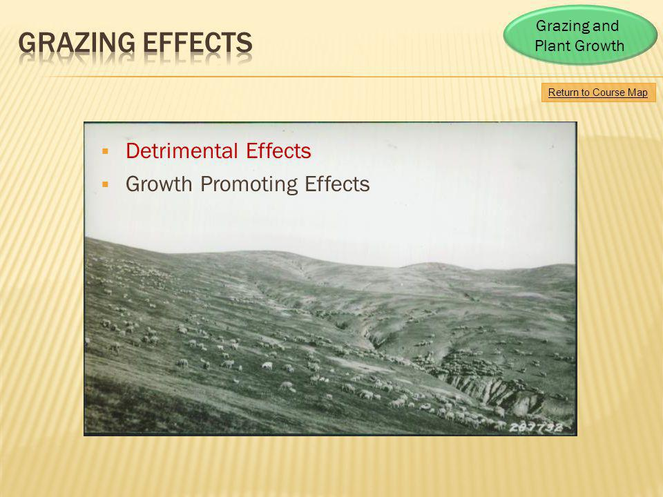 Detrimental Effects Growth Promoting Effects Return to Course Map Grazing and Plant Growth