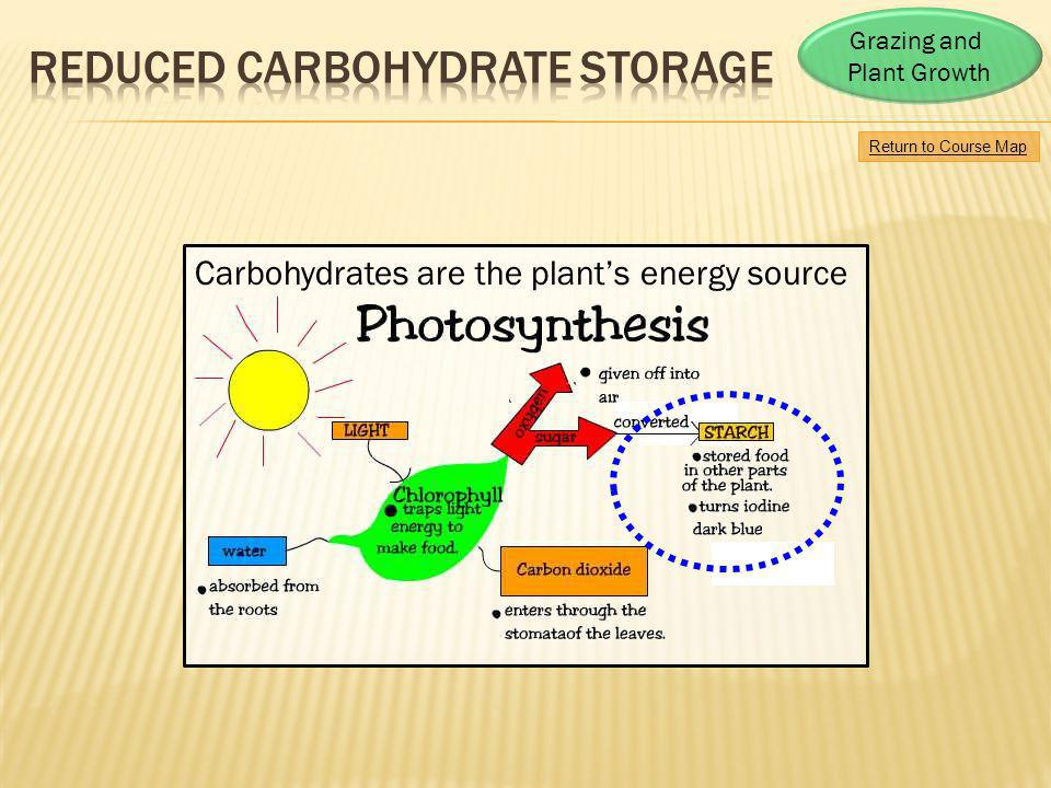 Return to Course Map Grazing and Plant Growth Carbohydrates are the plants energy source