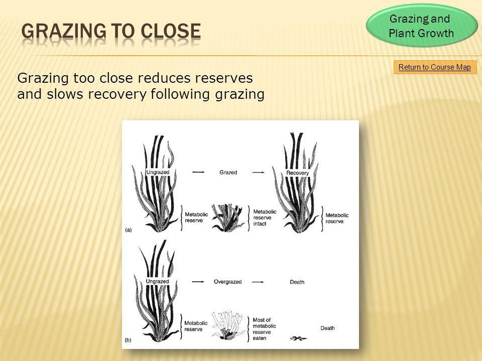 Return to Course Map Grazing and Plant Growth Grazing too close reduces reserves and slows recovery following grazing