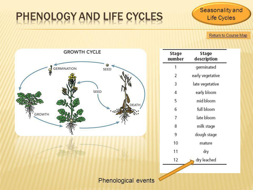 Return to Course Map Seasonality and Life Cycles Phenological events