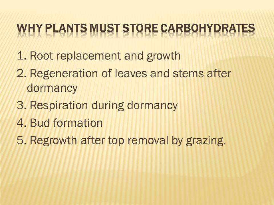 1. Root replacement and growth 2. Regeneration of leaves and stems after dormancy 3. Respiration during dormancy 4. Bud formation 5. Regrowth after to