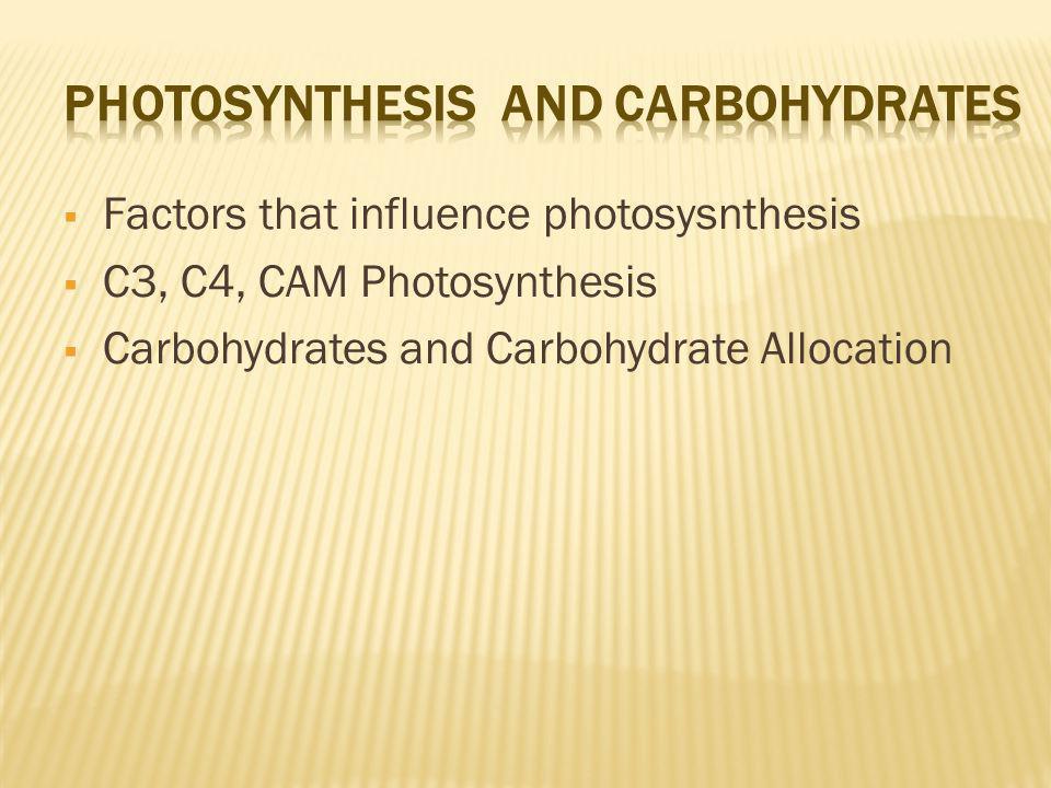 Factors that influence photosysnthesis C3, C4, CAM Photosynthesis Carbohydrates and Carbohydrate Allocation