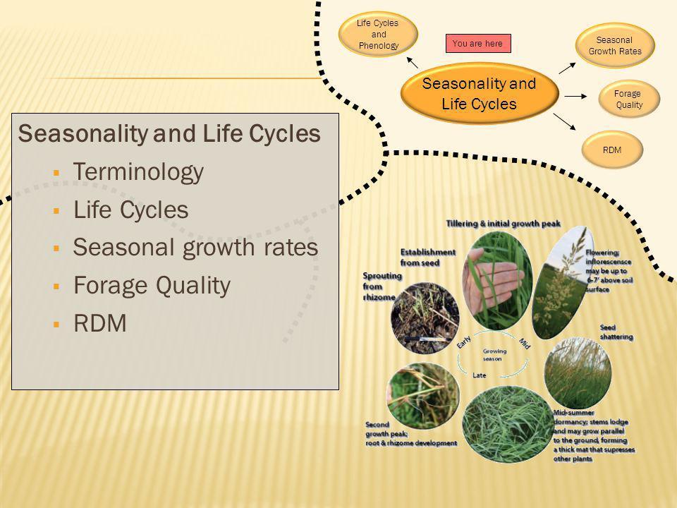 Seasonality and Life Cycles Terminology Life Cycles Seasonal growth rates Forage Quality RDM Seasonality and Life Cycles Seasonal Growth Rates You are