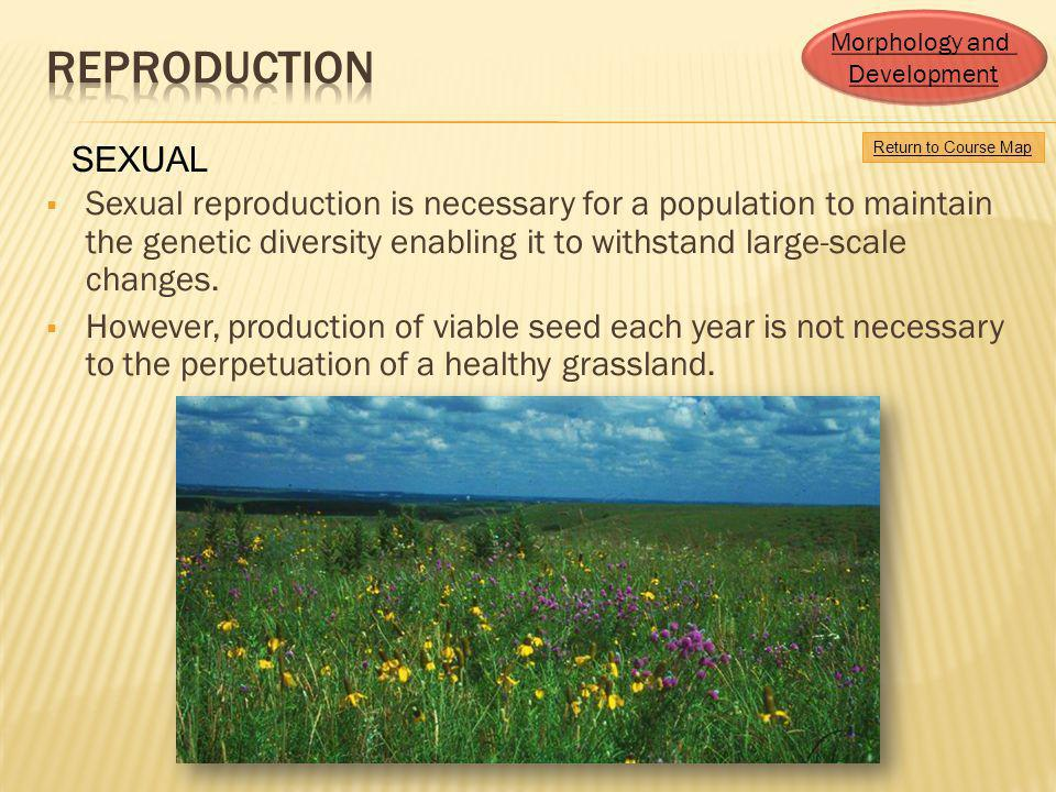 Sexual reproduction is necessary for a population to maintain the genetic diversity enabling it to withstand large-scale changes. However, production