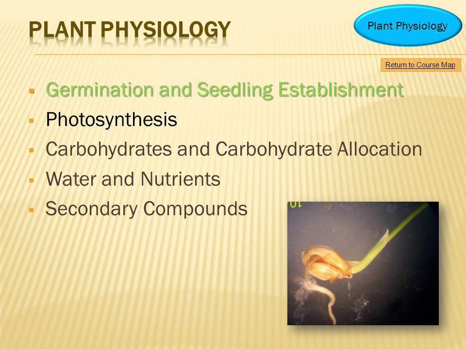 Germination and Seedling Establishment Germination and Seedling Establishment Photosynthesis Carbohydrates and Carbohydrate Allocation Water and Nutri
