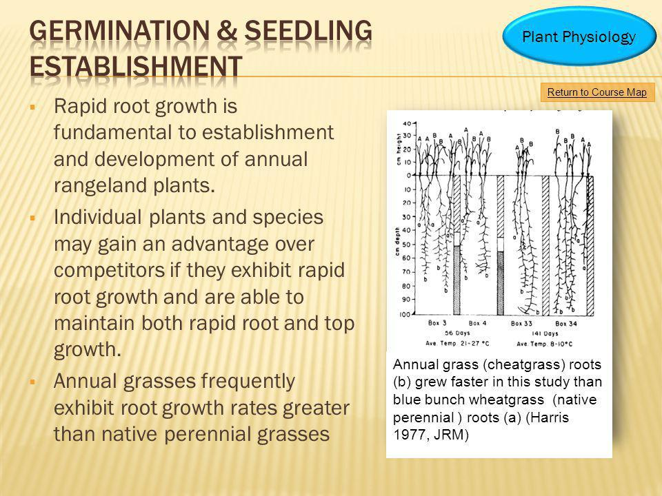 Rapid root growth is fundamental to establishment and development of annual rangeland plants. Individual plants and species may gain an advantage over