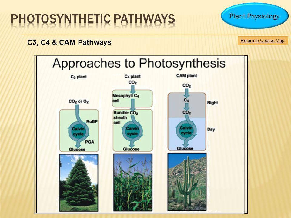 Return to Course Map Plant Physiology C3, C4 & CAM Pathways