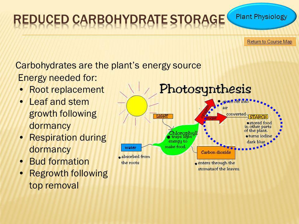 Carbohydrates are the plants energy source Energy needed for: Root replacement Leaf and stem growth following dormancy Respiration during dormancy Bud