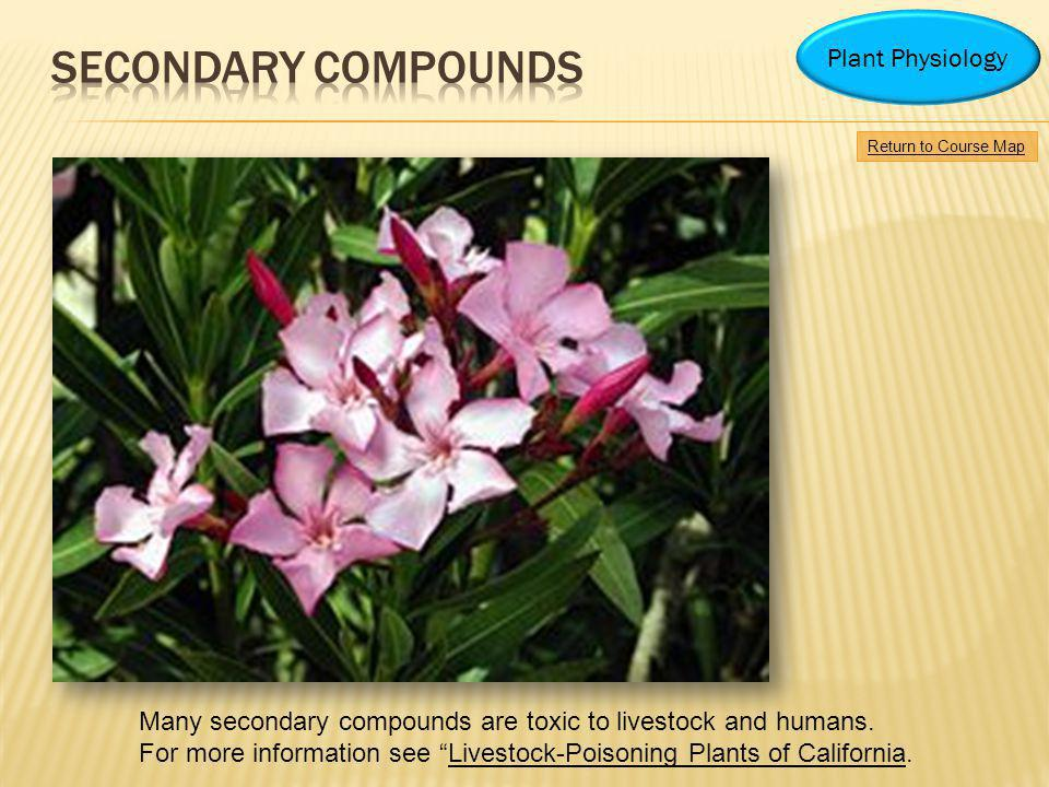 Return to Course Map Plant Physiology Many secondary compounds are toxic to livestock and humans. For more information see Livestock-Poisoning Plants