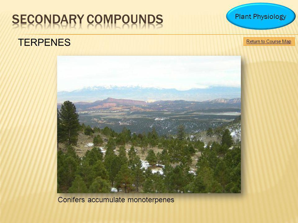 Conifers accumulate monoterpenes Return to Course Map Plant Physiology TERPENES
