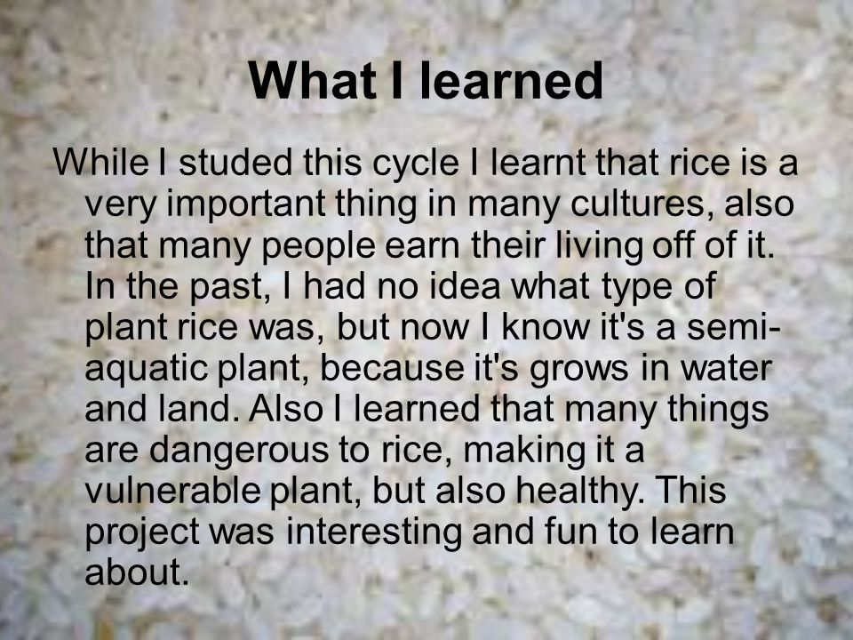 What I learned While I studed this cycle I learnt that rice is a very important thing in many cultures, also that many people earn their living off of it.