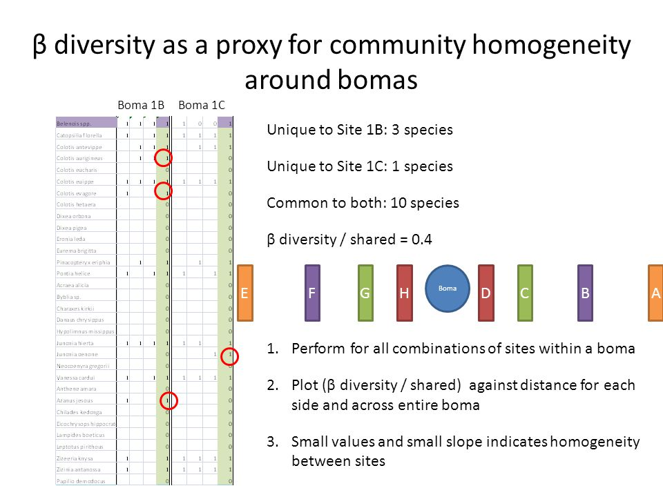 β diversity as a proxy for community homogeneity around bomas Boma 1BBoma 1C Unique to Site 1B: 3 species Unique to Site 1C: 1 species Common to both: 10 species β diversity / shared = 0.4 1.Perform for all combinations of sites within a boma 2.Plot (β diversity / shared) against distance for each side and across entire boma 3.Small values and small slope indicates homogeneity between sites Boma HDGCBFAE
