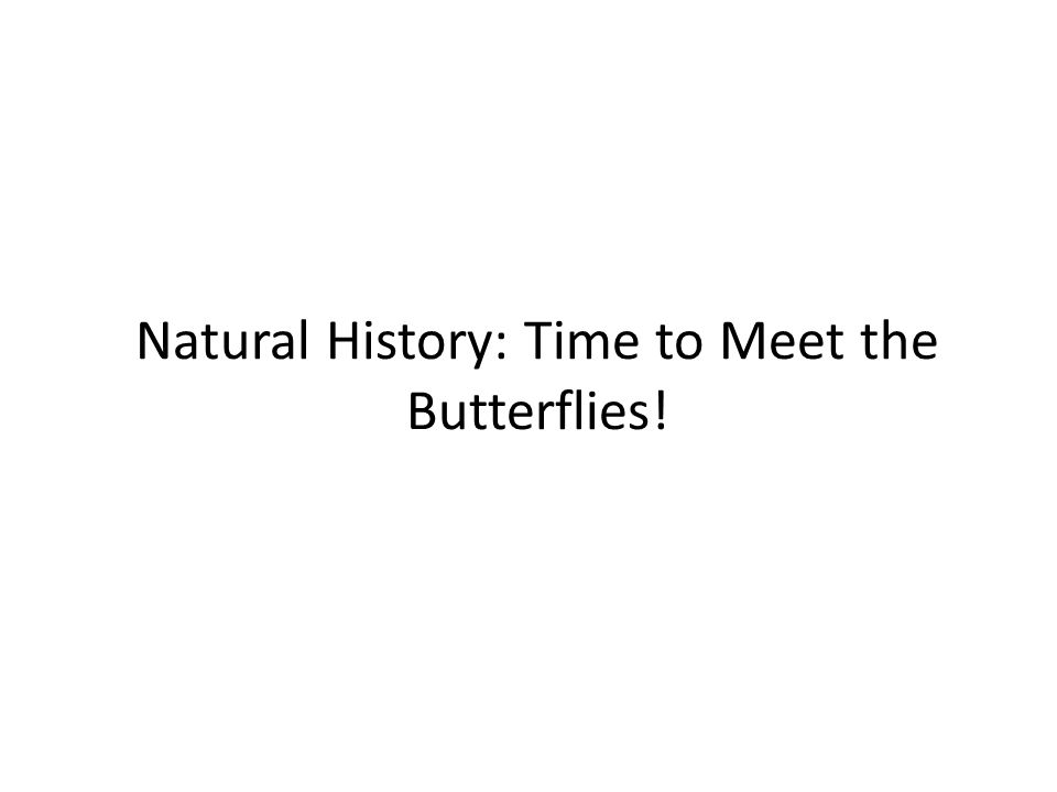 Natural History: Time to Meet the Butterflies!