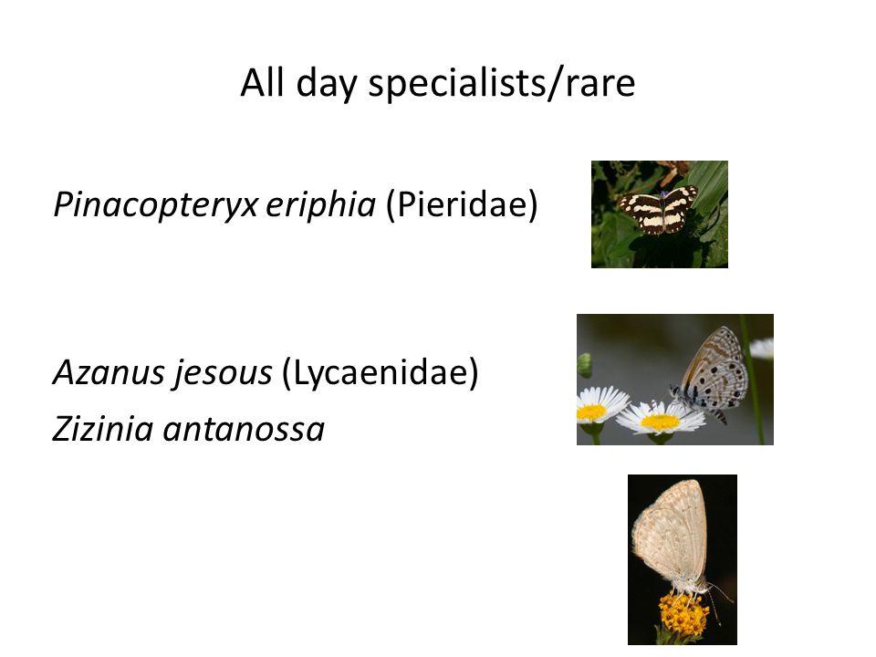 All day specialists/rare Pinacopteryx eriphia (Pieridae) Azanus jesous (Lycaenidae) Zizinia antanossa