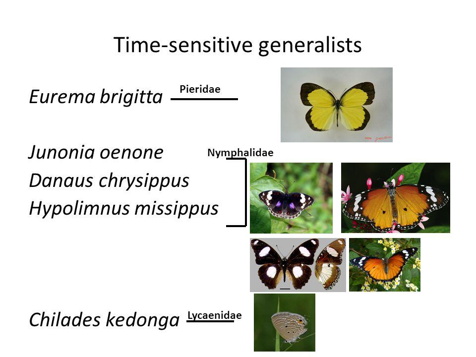 Time-sensitive generalists Eurema brigitta Junonia oenone Danaus chrysippus Hypolimnus missippus Chilades kedonga Pieridae Nymphalidae Lycaenidae