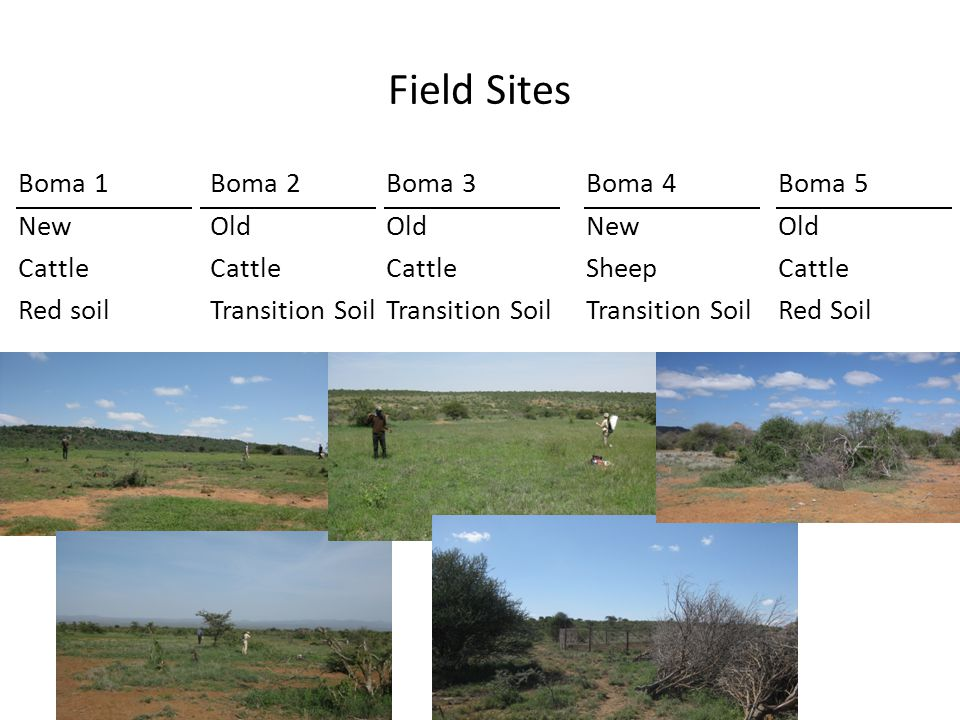Boma 2 Old Cattle Transition Soil Field Sites Boma 1 New Cattle Red soil Boma 3 Old Cattle Transition Soil Boma 4 New Sheep Transition Soil Boma 5 Old Cattle Red Soil