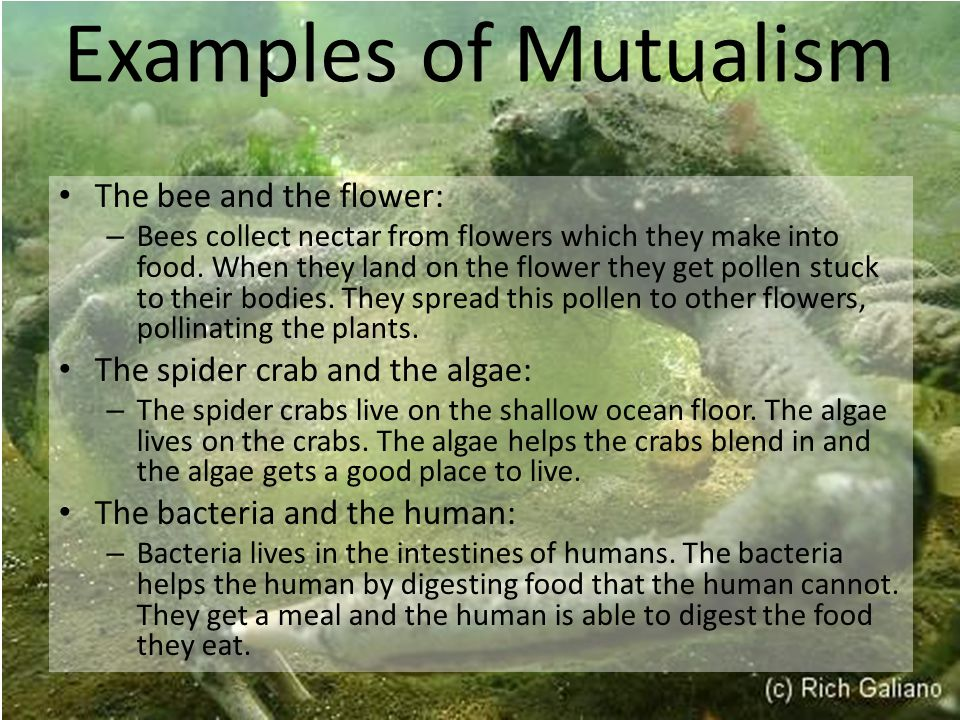 Examples of Mutualism The bee and the flower: – Bees collect nectar from flowers which they make into food.
