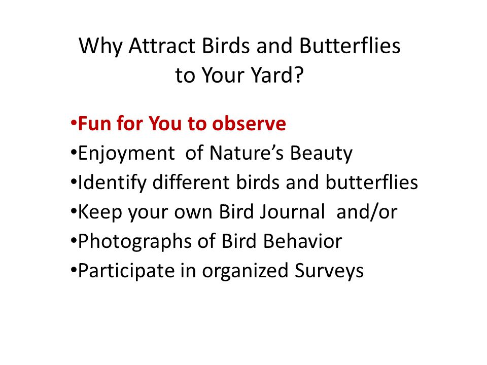 Why Attract Birds and Butterflies to Your Yard.
