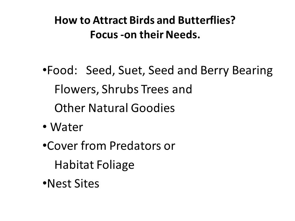 How to Attract Birds and Butterflies. Focus -on their Needs.