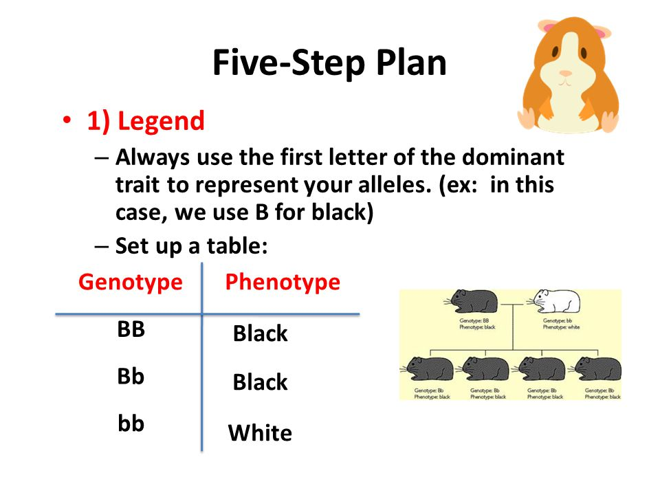 Sample Problem You do NOT have to write this slide! In guinea pigs, Black (B) is dominant to White (b) Black guinea pig (BB) x White guinea pig (bb) W