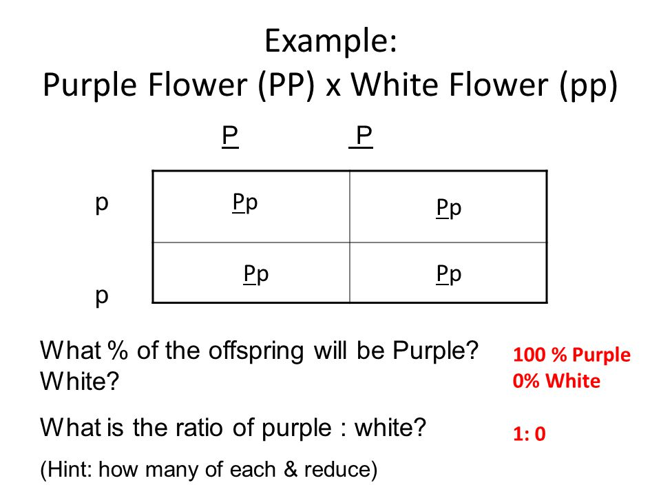 Whiteboards Keep your notes & flow map in front of you. Please do not draw on whiteboard unless instructed. For each problem you will do steps 1 & 2 (