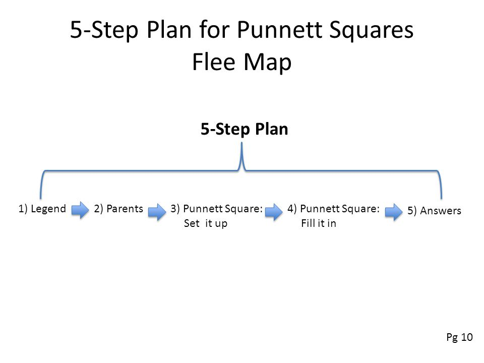 Punnett Squares Used to predict the traits of each possible offspring during a cross Five Step Plan – 1) Legend – 2) Parents – 3) Punnett square-set i
